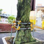 縛られた木の写真