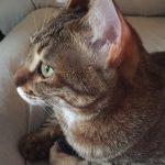 じ〜っと見る猫の目線