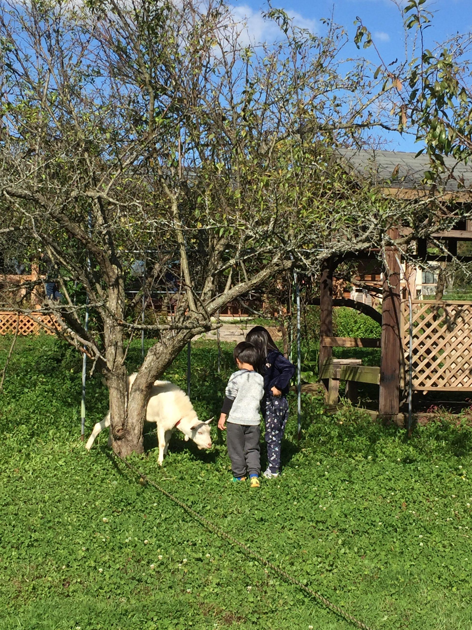 穏やかな農場